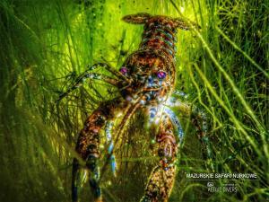 safari nurkowe nurek,pl 00015a